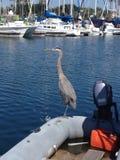 Ωκεανός και πουλί Στοκ Φωτογραφίες
