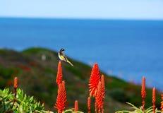 ωκεανός λόφων λουλουδιών πουλιών Στοκ εικόνες με δικαίωμα ελεύθερης χρήσης
