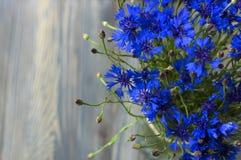 Ωραία bluebottles Στοκ Εικόνες