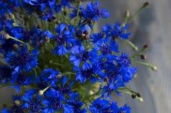 Ωραία bluebottles Στοκ φωτογραφία με δικαίωμα ελεύθερης χρήσης