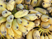 Ωριμάστε τις μπανάνες Στοκ φωτογραφίες με δικαίωμα ελεύθερης χρήσης