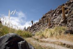 όαση ερήμων atacama Στοκ φωτογραφία με δικαίωμα ελεύθερης χρήσης