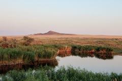 Όαση λιμνών Το τοπίο καλάμων και λιβαδιών Στοκ Εικόνα