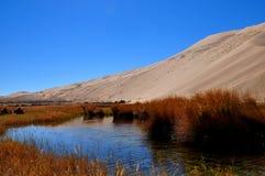 Όαση στην έρημο Στοκ εικόνα με δικαίωμα ελεύθερης χρήσης