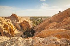 Όαση Chebika βουνών σε σύνορα της ερήμου Σαχάρα, Τυνησία, Αφρική Φθινόπωρο στοκ εικόνες με δικαίωμα ελεύθερης χρήσης