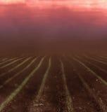 Όλα πνίγουν στο πυκνό ρεύμα της σκόνης Στοκ Εικόνα