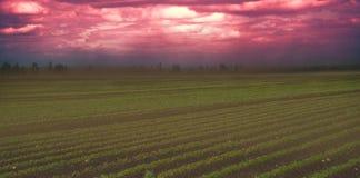Όλα πνίγουν στο πυκνό ρεύμα της σκόνης Στοκ φωτογραφία με δικαίωμα ελεύθερης χρήσης