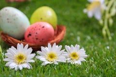2 όλα τα αυγά Πάσχας έννοιας νεοσσών κάδων ανθίζουν τη χλόη χρωμάτισαν τις τοποθετημένες νεολαίες Άσπρες μαργαρίτες στην πράσινη  Στοκ φωτογραφία με δικαίωμα ελεύθερης χρήσης