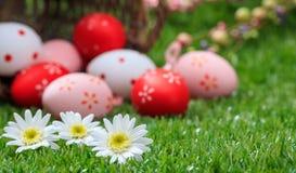 2 όλα τα αυγά Πάσχας έννοιας νεοσσών κάδων ανθίζουν τη χλόη χρωμάτισαν τις τοποθετημένες νεολαίες Άσπρες μαργαρίτες στην πράσινη  Στοκ Εικόνες