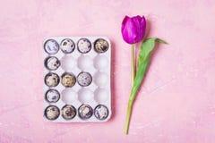 2 όλα τα αυγά Πάσχας έννοιας νεοσσών κάδων ανθίζουν τη χλόη χρωμάτισαν τις τοποθετημένες νεολαίες Το γράμμα Ε φιαγμένο από αυγά Τ Στοκ Εικόνα