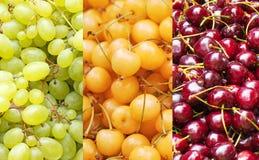 Όλα τα χρώματα είναι γεύσεις στοκ εικόνα