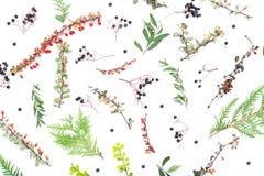 όλες οι οποιεσδήποτε φθινοπώρου ανασκόπησης στοιχείων floral συστάσεις μεγέθους κλίμακας αντικειμένων απεικόνισης μεμονωμένες στο Στοκ Φωτογραφίες