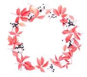 όλες οι οποιεσδήποτε φθινοπώρου ανασκόπησης στοιχείων floral συστάσεις μεγέθους κλίμακας αντικειμένων απεικόνισης μεμονωμένες στο Στοκ φωτογραφίες με δικαίωμα ελεύθερης χρήσης