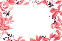 όλες οι οποιεσδήποτε φθινοπώρου ανασκόπησης στοιχείων floral συστάσεις μεγέθους κλίμακας αντικειμένων απεικόνισης μεμονωμένες στο Στοκ φωτογραφία με δικαίωμα ελεύθερης χρήσης