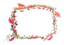 όλες οι οποιεσδήποτε φθινοπώρου ανασκόπησης στοιχείων floral συστάσεις μεγέθους κλίμακας αντικειμένων απεικόνισης μεμονωμένες στο Στοκ Φωτογραφία