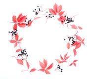 όλες οι οποιεσδήποτε φθινοπώρου ανασκόπησης στοιχείων floral συστάσεις μεγέθους κλίμακας αντικειμένων απεικόνισης μεμονωμένες στο Στοκ εικόνα με δικαίωμα ελεύθερης χρήσης