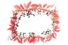 όλες οι οποιεσδήποτε φθινοπώρου ανασκόπησης στοιχείων floral συστάσεις μεγέθους κλίμακας αντικειμένων απεικόνισης μεμονωμένες στο Στοκ Εικόνα