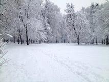 Όλος-άσπρος χειμώνας στο πάρκο στοκ εικόνες