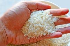 όλο το ρύζι Στοκ Εικόνες