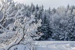 Όλο το σύνολο δέντρων του χιονιού στοκ φωτογραφίες με δικαίωμα ελεύθερης χρήσης