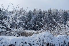 Όλο το σύνολο δέντρων του χιονιού στοκ εικόνες