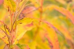 Όλο το χρώμα ουράνιων τόξων στις εγκαταστάσεις στη φύση φθινοπώρου στοκ φωτογραφία με δικαίωμα ελεύθερης χρήσης