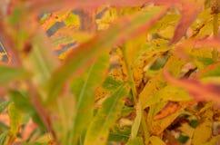 Όλο το χρώμα ουράνιων τόξων στις εγκαταστάσεις στη φύση φθινοπώρου στοκ φωτογραφία