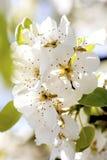 Όμοια λουλούδια στο χρόνο άνοιξη Στοκ Εικόνες