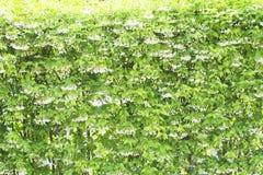 Όμορφα άγρια λουλούδια δαμάσκηνων νερού Στοκ εικόνες με δικαίωμα ελεύθερης χρήσης