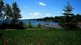 Όμορφα άγρια λουλούδια που αυξάνονται κοντά στη βόρεια ακτή του ανωτέρου λιμνών φιλμ μικρού μήκους