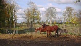 Όμορφα άλογα στο ζωηρόχρωμο αγρόκτημα που τρώνε το σανό, χώρα ονείρου φαντασίας απόθεμα βίντεο