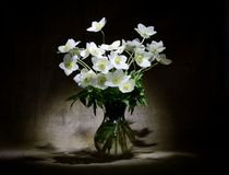 Όμορφα άσπρα λουλούδια στο σκοτεινό υπόβαθρο Στοκ Εικόνες