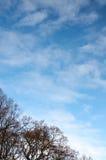 Όμορφα άσπρα σύννεφα και δέντρα φθινοπώρου ενάντια στο μπλε ουρανό στοκ φωτογραφίες με δικαίωμα ελεύθερης χρήσης