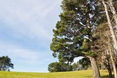 Όμορφα δέντρα λιβαδιών τοπίων άνοιξη πράσινα και υπόβαθρο μπλε ουρανού Στοκ Εικόνες