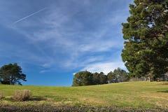 Όμορφα δέντρα λιβαδιών τοπίων άνοιξη πράσινα και υπόβαθρο μπλε ουρανού Στοκ Εικόνα
