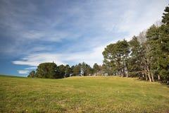 Όμορφα δέντρα λιβαδιών τοπίων άνοιξη πράσινα και υπόβαθρο μπλε ουρανού Στοκ Φωτογραφία