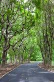 Όμορφα δέντρα μονοπατιών κράσπεδων Στοκ Εικόνες