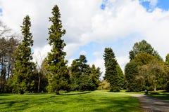 Δέντρα στο εθελοντικό πάρκο Στοκ φωτογραφία με δικαίωμα ελεύθερης χρήσης