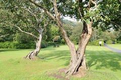 Όμορφα δέντρα σε έναν πράσινο χορτοτάπητα Στοκ φωτογραφία με δικαίωμα ελεύθερης χρήσης