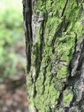 Όμορφα δέντρα στο πάρκο Στοκ εικόνες με δικαίωμα ελεύθερης χρήσης