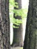 Όμορφα δέντρα στο πάρκο Στοκ Εικόνες