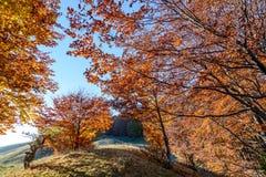 Όμορφα δέντρα φθινοπώρου σε μια δασική σκηνή φθινοπώρου βουνών με το γ Στοκ Φωτογραφία
