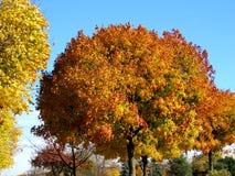 Όμορφα δέντρα 2016 φθινοπώρου του Τορόντου Στοκ εικόνες με δικαίωμα ελεύθερης χρήσης