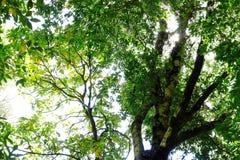 Όμορφα αναδρομικά φωτισμένα πολύβλαστα πράσινα φύλλα στο δάσος Στοκ Εικόνες