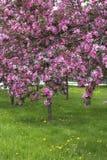 όμορφα ανθίζοντας δέντρα άν&omi Στοκ φωτογραφία με δικαίωμα ελεύθερης χρήσης