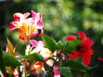 Όμορφα ανθίζοντας λουλούδια Στοκ εικόνες με δικαίωμα ελεύθερης χρήσης
