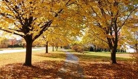 Όμορφα αποβαλλόμενα δέντρα το φθινόπωρο με τα ζωηρά χρώματα στοκ εικόνα με δικαίωμα ελεύθερης χρήσης