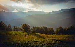 Όμορφα βουνά και πρωί μπλε ουρανού Carpathians Ukr Στοκ Φωτογραφίες