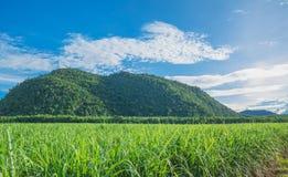 Όμορφα βουνά με το τοπίο πράσινων εγκαταστάσεων και μπλε ουρανού Στοκ Εικόνα