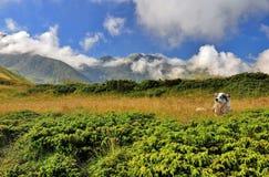 όμορφα βουνά τοπίων στοκ εικόνες με δικαίωμα ελεύθερης χρήσης